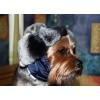 пошив одежды для собак в интернет магазине Алефтинка